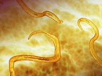 лечение паразитов в организме стационарно новосибирск